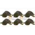 Tartaruga marinha kit com 6
